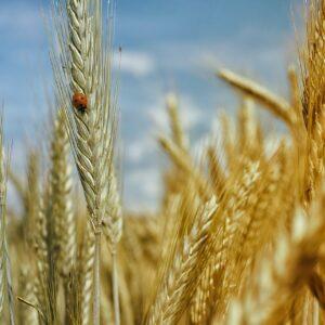 AG Landwirtschaft